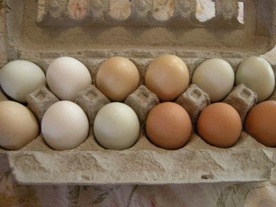 eggs-137