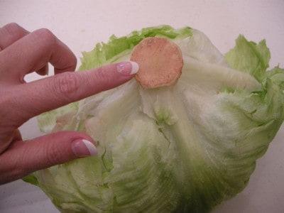 lettuce 025