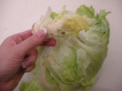 lettuce 028