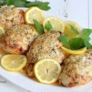 lemon parm chicken white background